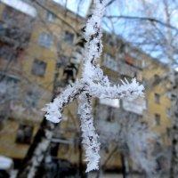 Лапка :: Николай Филоненко