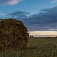 Невозможно задержать последние дни уходящего лета :: Ольга Семенова