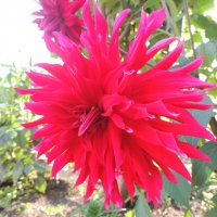 Крсный цветок :: Артём Захарин