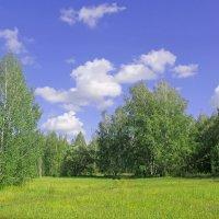 На опушке леса :: Эркин Ташматов