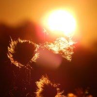 Солнце на закате ! :: Максим Есменов