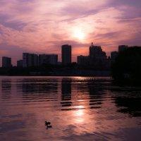 Лакричное утро... :: Anna Chernopyatova