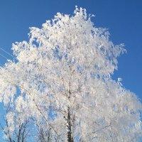 Иней на дереве :: Николай Филоненко