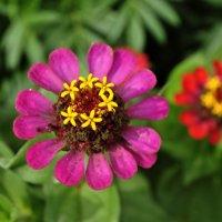 Цветок :: Илсур Загитов