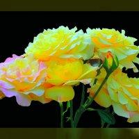 Розы по фото Геннадия Александровича 1 :: Владимир Хатмулин