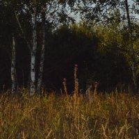 вечер :: Вика Азарова