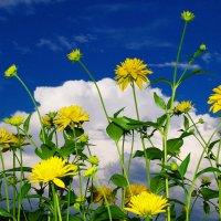 Красивое сочетание летних цветов :: Ольга Ситникова