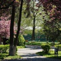 Весна в Ужгороде :: Сергей Форос