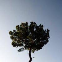 Дерево :: Владимир Бардин
