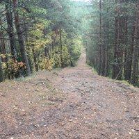 Беговая тропа :: Андрей Божьев