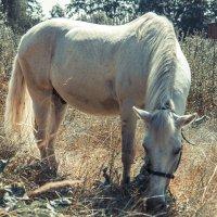 лошадь :: Екатерина Рябцева