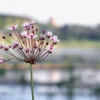 Коль река, так теки, коль цветок, так цвети :: Ирина Данилова