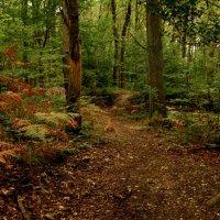 Сквозь лес :: Alexander