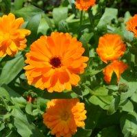 Оранжевое счастье.. :: zoja