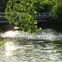 Вода и блики :: Наталья