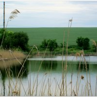 Зеркальный пруд в мае... :: Тамара (st.tamara)