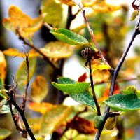 """""""Вот и осень - она пришла внезапно..."""" :: Фотогруппа Весна."""