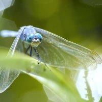 Голубые глаза :: Ulugbek Khalilov