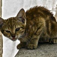 Я не трус, но я боюсь!-из серии Кошки очарование мое! :: Shmual Hava Retro