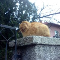 Осенний кот :: Елена Даньшина