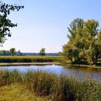 На диком озере. :: Анатолий