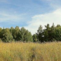 Травы лета :: Лидия (naum.lidiya)