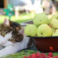 Кошка с яблоками :: Татьяна