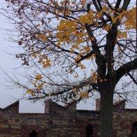 Дерево. :: Юлия Ваганова