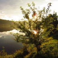 Красивое рядом IMG_7837 :: Андрей Лукьянов
