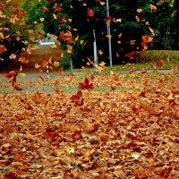 Осенний вальс :: Alexander Andronik