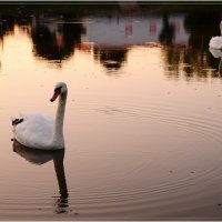 Вечером на озере :: Андрей Куприянов