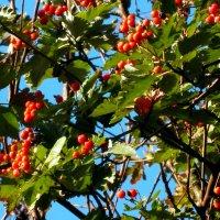 Осенняя акварель... :: Тамара (st.tamara)