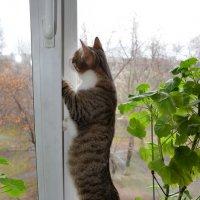 свежий воздух свободы :: Евгений Фролов