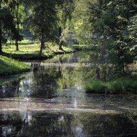 молочные реки (Водный лабиринт в Гатчинском парке) :: sv.kaschuk