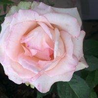 цветы :: Танюшка Ильина Карих