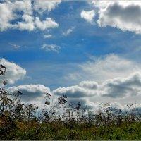 небо над полем :: Сергей Швечков