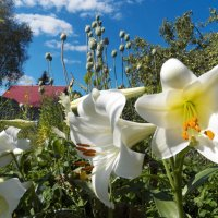 Мой сад. :: Виктор Елисеев
