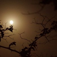 луна :: Maria Arnold