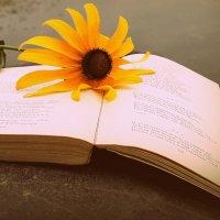 Книга,забытая кем-то на озере.. :: Елена Прихожай