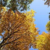 Осенние сени #4 :: Виктор Четошников