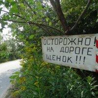 Осторожно! :: Светлана Лысенко