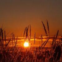 Закат в начале осени. 03.09.2014. 01. :: Анатолий Клепешнёв