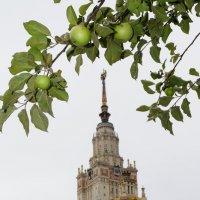 Прихвати парочку яблочков в универ :: Андрей Евгеньевич