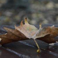 Осень... :: Ольга Степанова