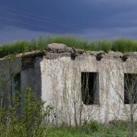 Эко крыша... :: Ольга Степанова