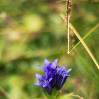 цветки :: Юлия Чорнявская