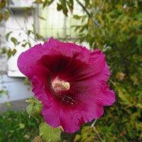 Еще цветут! IMG_8090 :: Андрей Лукьянов
