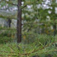 В стране пауков 3 :: Светлана Франчук