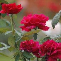 Монастырские цветы,.. :: Елена Олейникова