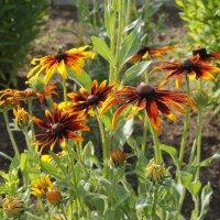 Цветы в моем саду :: Елена Олейникова